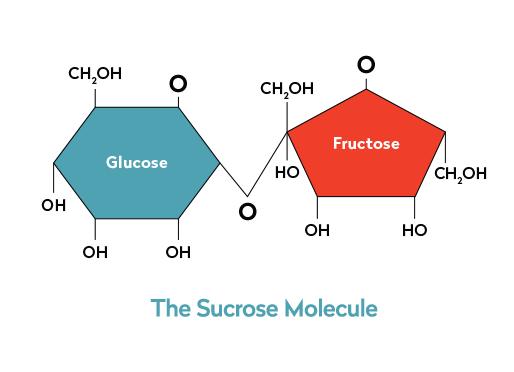 Sucrose-Molecule-vWeb-2-Sugarproof-1-1